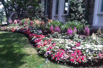Perennials, Annuals and Pots