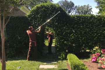 Property Maintenance, Fine Pruning, Plant Health Care